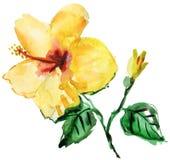 Akwarela poślubnika żółty kwiat Fotografia Stock