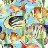 Akwarela podwodny wzór Ręka malująca zwrotnik ryba: angelfish, butterflyfish, clownfish i laminaria na błękicie, Zdjęcie Royalty Free