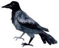 Akwarela ptak Obraz Stock