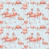 Akwarela różowego flaminga bezszwowy wzór Ręka malował jaskrawych egzotycznych ptaki odizolowywających na błękitnym tle dzikie ży ilustracja wektor