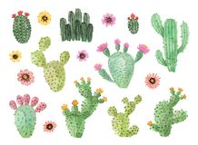 Akwarela ręka malujący kaktusy z kwiatami Obraz Stock
