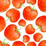 Akwarela ręka rysujący bezszwowy wzór z czerwonymi dojrzałymi pomidorami Obrazy Royalty Free