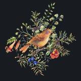 Akwarela rocznika kwiecista lasowa kartka z pozdrowieniami z ptakami, jodła rozgałęzia się, jagody, ćma, paproć kwitnie i rozgałę ilustracja wektor