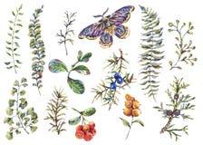 Akwarela rocznika kwiecisty lasowy ustawiający gałąź, jagody, ćma, kwiaty i paproć jodły, royalty ilustracja