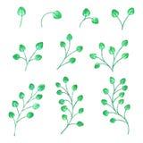 Akwarela rozgałęzia się z zielonymi liśćmi w różnorodnych kształtach również zwrócić corel ilustracji wektora Zdjęcie Royalty Free