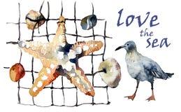 Akwarela: rozgwiazda, otoczaki, seashells i seagulls, Obraz Royalty Free