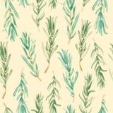 Akwarela rozmarynów wzór bezszwowy, zielona rozmarynowa dekoracja, rzemiosło etykietki projekta życiorys jedzenie Fotografia Royalty Free
