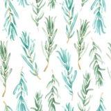 Akwarela rozmarynów wzór bezszwowy, zielona rozmarynowa dekoracja, rzemiosło etykietki projekta życiorys jedzenie Zdjęcie Royalty Free