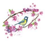 Akwarela rysuje bezszwowego wzór na temacie wiosna, upał, ilustracja ptak oddział wojskowy kształtujący wielcy tits Fotografia Royalty Free
