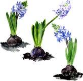 Akwarela rysunku kwiaty Obrazy Royalty Free