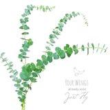 Akwarela stylowy eukaliptus rozgałęzia się bukiet ilustracji