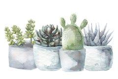 Akwarela sukulentu i kaktusa set Fotografia Royalty Free