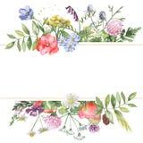 Akwarela sztandar z wildflowers, ziele, rośliny, łąka kwitnie ilustracja wektor