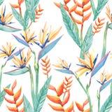 Akwarela tropikalni kwiaty sterylizują und gałąź Bezszwowa deseniowa tropikalna ro?lina royalty ilustracja