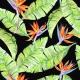 Akwarela tropikalny pattern8 royalty ilustracja