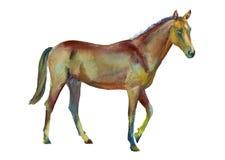 Akwarela trwanie koń Fotografia Royalty Free