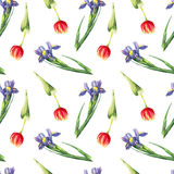 Akwarela tulipan i irysowy bezszwowy wzór na białym tle Obrazy Royalty Free