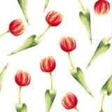 Akwarela tulipanowy bezszwowy wzór na białym tle Obraz Royalty Free