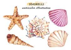 Akwarela ustawiająca podwodny życie protestuje - różnorodni tropikalni seashells i rozgwiazda ilustracji