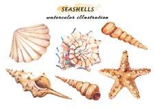 Akwarela ustawiająca podwodny życie protestuje - różnorodni tropikalni seashells i rozgwiazda royalty ilustracja