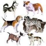 Akwarela ustawiająca psy ilustracji