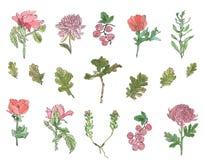 Akwarela Ustawiająca różne rośliny - dzikie, jagody, wzrastał, chryzantema i maczek z liśćmi obrazy stock