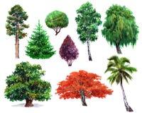 Akwarela ustawiająca rośliny dąb, krzak, Japoński klon, wierzba, palma, świerczyna, sosna, odizolowywająca Obrazy Stock
