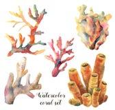Akwarela ustawiająca z koralami Ręka malował podwodne gałąź odizolowywać na białym tle tropikalne morza życia royalty ilustracja