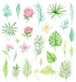 Akwarela ustawiająca tropikalni kwiaty Obraz Stock