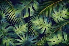 Akwarela wektorowego sztandaru tropikalni liście i gałąź odizolowywający na ciemnym tle Zdjęcia Royalty Free