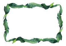 Akwarela wektoru zieleni sztandaru tropikalni liście i gałąź odizolowywający na białym tle zdjęcie stock