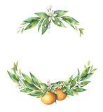 Akwarela wianku pomarańcze ręka rysująca owocowa gałąź ilustracji