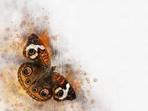 Akwarela wizerunek motyl na rocznika tle Motyli zako?czenie acrylic kolor?w papier ilustraci papier Zwierz?cy ?wiat insekty royalty ilustracja