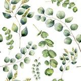 Akwarela wzór z eukaliptusem Ręka malował kwiecistego ornament z srebnym dolarem i dziecko eukaliptusowymi gałąź, siającym ilustracji