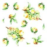 Akwarela wzór z jabłkiem Obraz Royalty Free