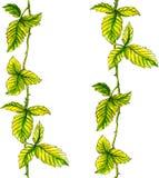 Akwarela wzór z pionowo liśćmi Obraz Stock