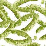 Akwarela wzór z zielonymi grochami ręka rysująca na białym tle Obraz Royalty Free