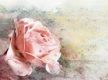 Akwarela wzrastał na grunge ściany teksturze 3 Zdjęcia Royalty Free