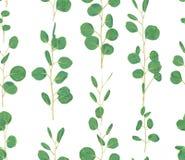 Akwarela zielony kwiecisty bezszwowy wzór z eukaliptusowym round l royalty ilustracja