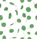 Akwarela zielony kwiecisty bezszwowy wzór z eukaliptusowymi liśćmi ilustracja wektor