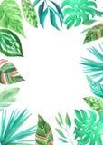 Akwarela zielony tropikalny karciany szablon Fotografia Royalty Free