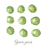 Akwarela zielonych grochów ręka malująca Zdjęcie Royalty Free