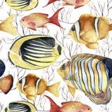 Akwarela zwrotnika morza wzór Ręka malująca zwrotnik ryba: angelfish, butterflyfish, clownfish i koral odizolowywający na bielu, Obrazy Stock