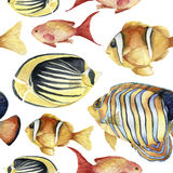 Akwarela zwrotnika morza wzór Ręka malująca zwrotnik ryba: angelfish, butterflyfish, clownfish odizolowywający na bielu Zdjęcie Royalty Free