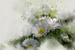 Akwarele malować białe stokrotki fotografia stock