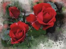Akwarele malować czerwone róże zdjęcie royalty free