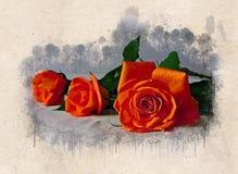 Akwarele malować piękne pomarańczowe róże obrazy stock