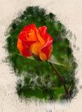 Akwarele malować piękne pomarańczowe róże obrazy royalty free