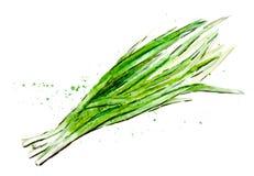 Akwarele malujący warzywa ręka patroszona ilustracji