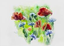 Akwarele malujący kwiaty, maczki i cornflowers, Zdjęcia Royalty Free
